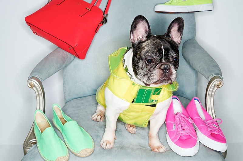 shopbop dogs spring accessories1 Cute Alert: Shopbop Enlists Dogs to Model Spring Accessories