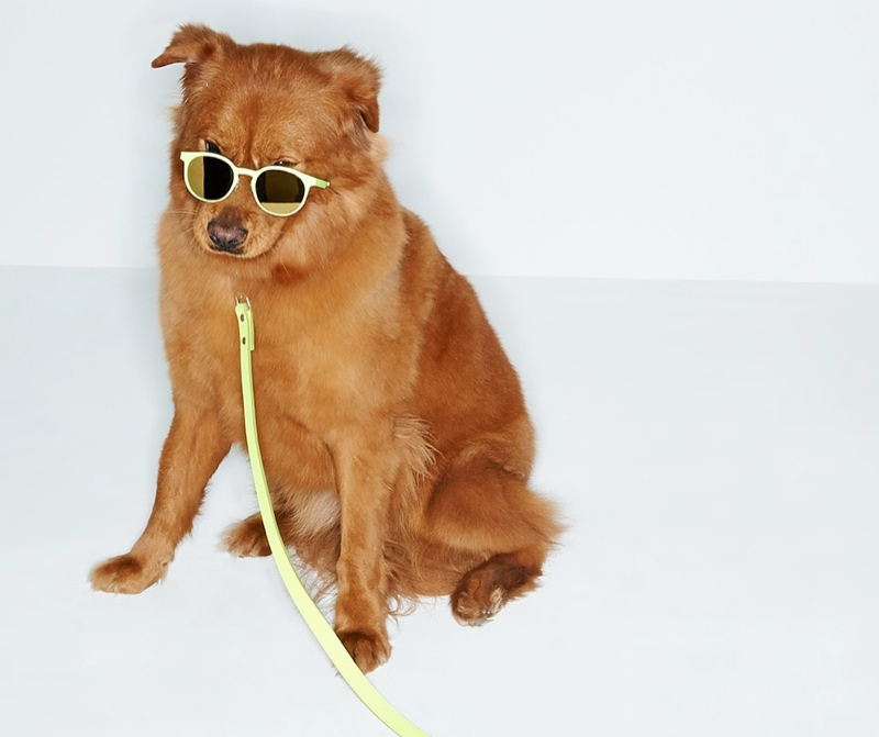 shopbop dogs spring accessories2 Cute Alert: Shopbop Enlists Dogs to Model Spring Accessories