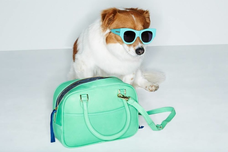 shopbop dogs spring accessories4 Cute Alert: Shopbop Enlists Dogs to Model Spring Accessories