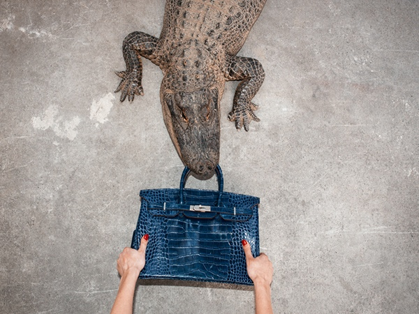 birkin alligator tyler shields1 In Other News, Here Are Photos of a $100,000 Birkin Bag Being Fed to an Alligator