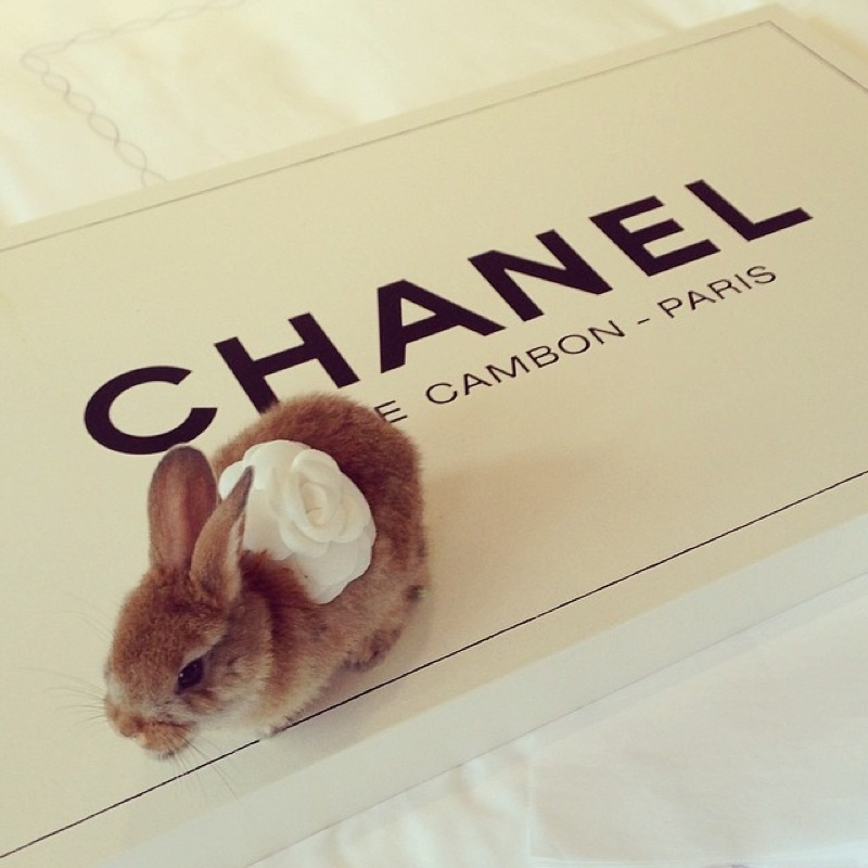 cecil bunny delevingne4 Cara Delevingne Has a Bunny Named Cecil & It Already Has 50,000 Instagram Followers
