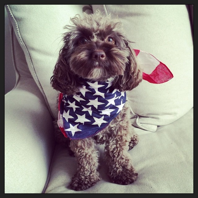 lindsey dog Celebrating the 4th: Miranda Kerr, Alessandra Ambrosio + More Independence Day Instagrams