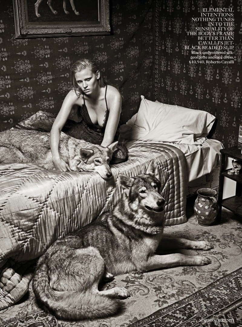 lara vogue uk001 800x1077 Lara Stone Poses with Fur, Wolves for Vogue UK Shoot by Mario Sorrenti