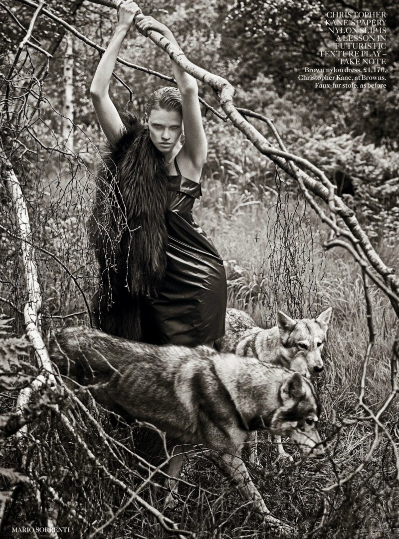 lara vogue uk009 800x1081 Lara Stone Poses with Fur, Wolves for Vogue UK Shoot by Mario Sorrenti