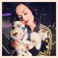 Katy Perry Debuts Purple Hair, See the Images!