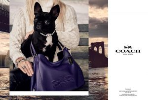 Lady Gaga's Dog Lands Coach Campaign Lensed by Steven Meisel