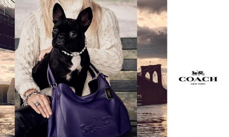 Lady Gaga's dog, Miss Asia Kinney, stars in Coach handbag advertising campaign