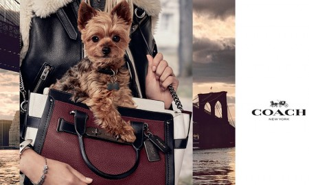 Miranda Kerr's dog, Frankie, for Coach