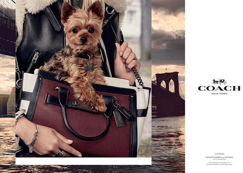2 More Famous Dogs Join Coach's Pup Campaign