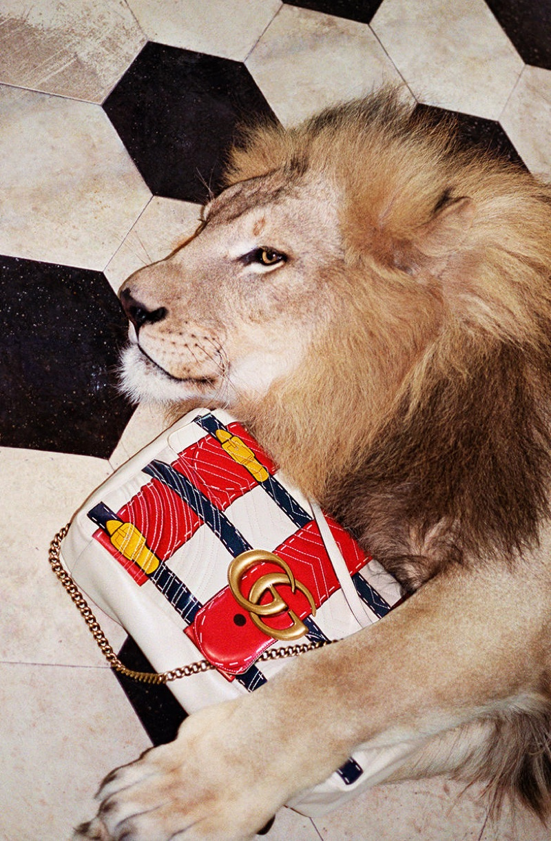 Italian fashion brand Gucci features a lion in its spring 2017 campaign