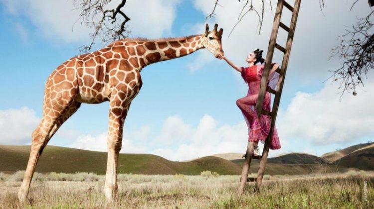 Posing with a giraffe, Fei Fei Sun models fuchsia Valentino gown