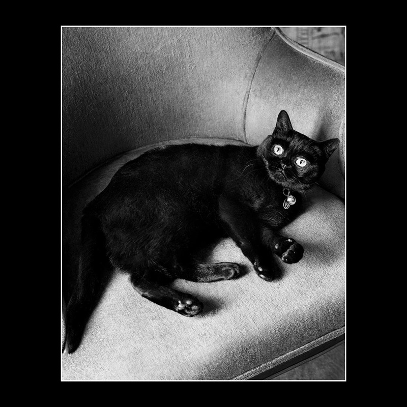 A black cat stars in Givenchy's fall-winter 2017 campaign