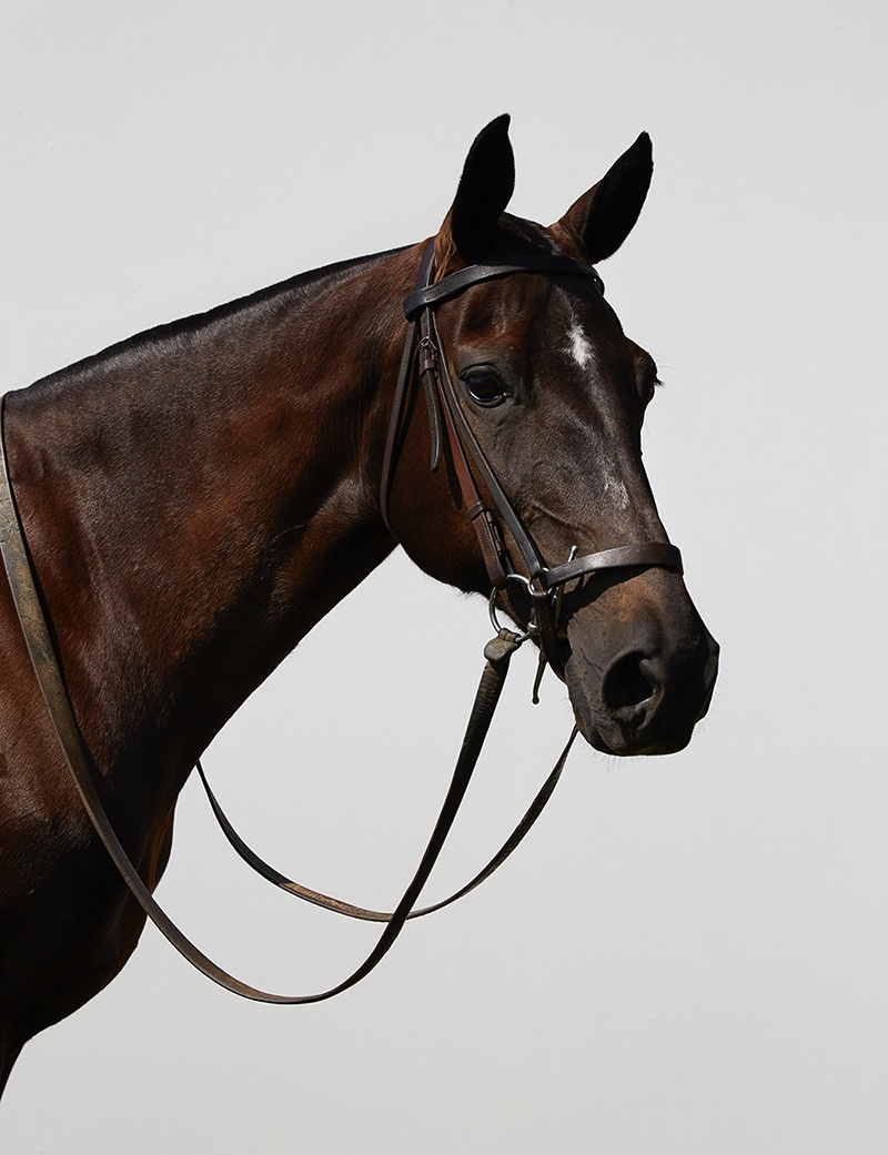 Pauline Van Der Cruysse Poses in Equestrian Looks for Myself Germany