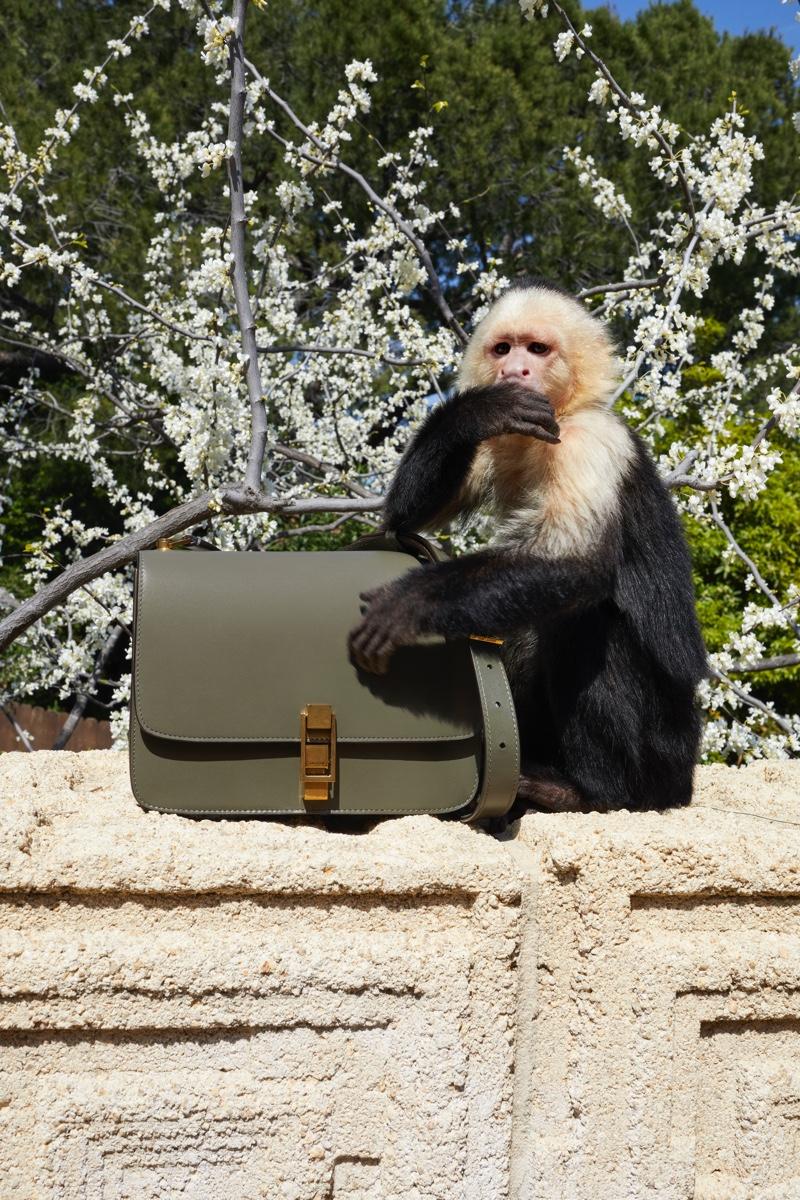 Allie the Monkey fronts Saint Laurent winter 2019 campaign