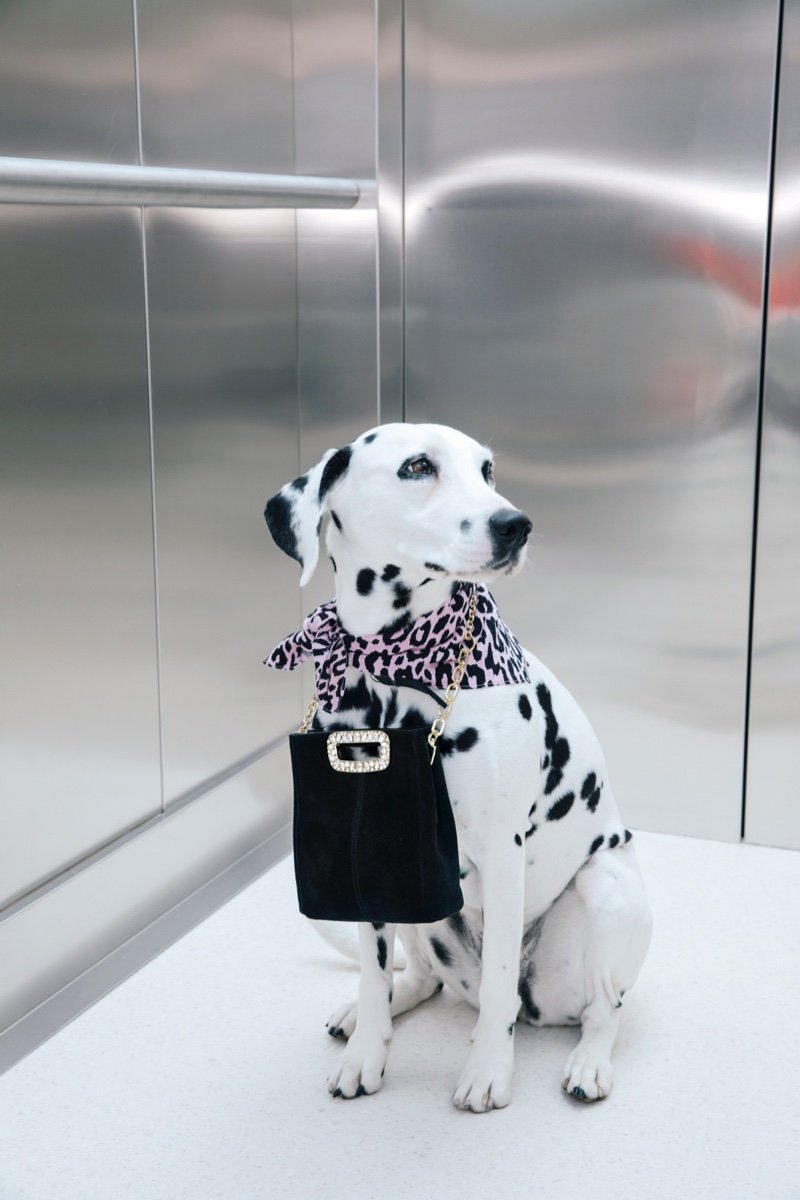 Dogs take the spotlight in Maje fall-winter 2019 campaign