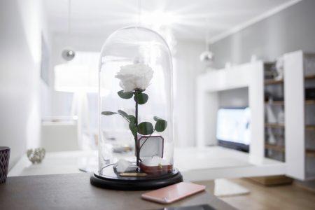 Eternity Rose