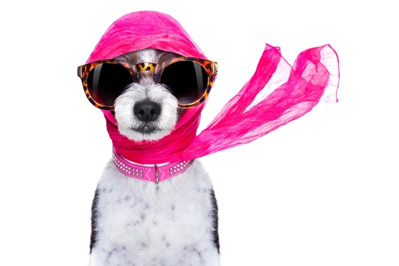 Chic Dog Sunglasses Headscarf Pink Collar