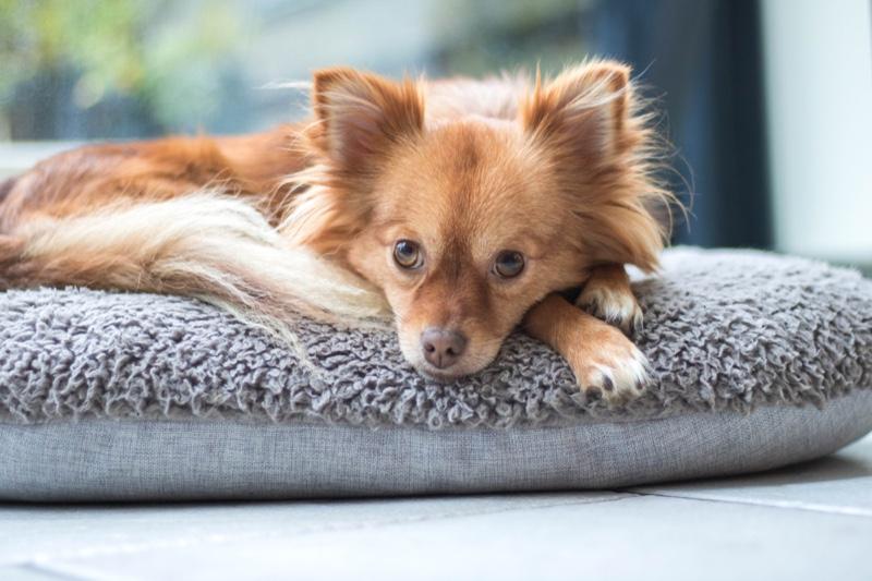 Dog Long Hair Dogbed