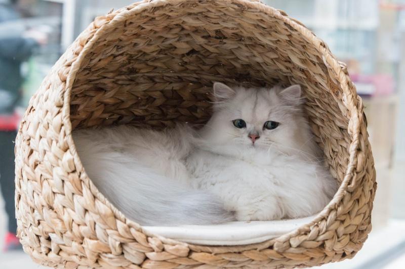 White Cat basket Bed