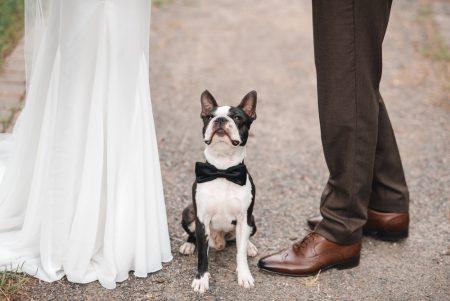 Dog Wedding Bow-tie